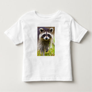 The raccoon, Procyon lotor, is a widespread, 3 Shirt