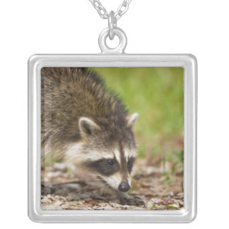 The raccoon, Procyon lotor, is a widespread, 4 Square Pendant Necklace