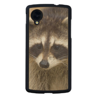 The raccoon, Procyon lotor, is a widespread, Carved® Maple Nexus 5 Case