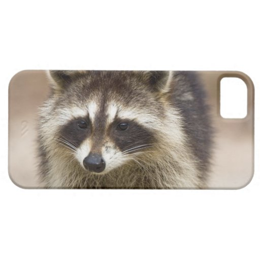 The raccoon, Procyon lotor, is a widespread, iPhone 5 Cases