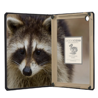 The raccoon, Procyon lotor, is a widespread, iPad Mini Cover
