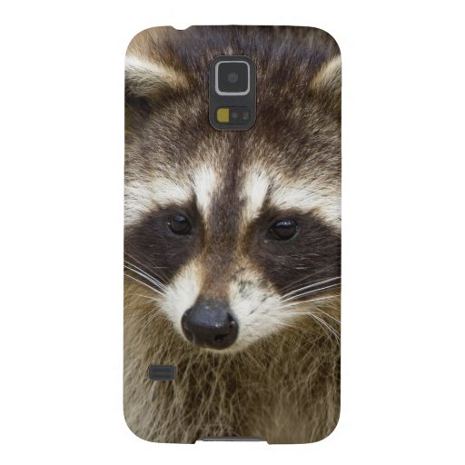 The raccoon, Procyon lotor, is a widespread, Galaxy S5 Case
