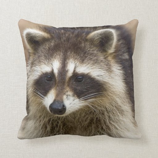 The raccoon, Procyon lotor, is a widespread, Throw Pillow