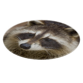 The raccoon, Procyon lotor, is a widespread, Cutting Board