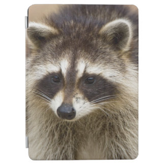 The raccoon, Procyon lotor, is a widespread, iPad Air Cover