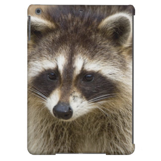 The raccoon, Procyon lotor, is a widespread, iPad Air Covers