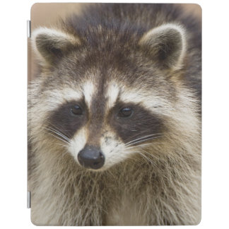 The raccoon, Procyon lotor, is a widespread, iPad Cover