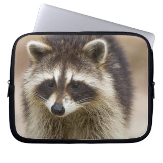 The raccoon, Procyon lotor, is a widespread, Laptop Computer Sleeve