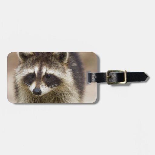 The raccoon, Procyon lotor, is a widespread, Travel Bag Tags