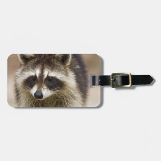 The raccoon, Procyon lotor, is a widespread, Luggage Tags