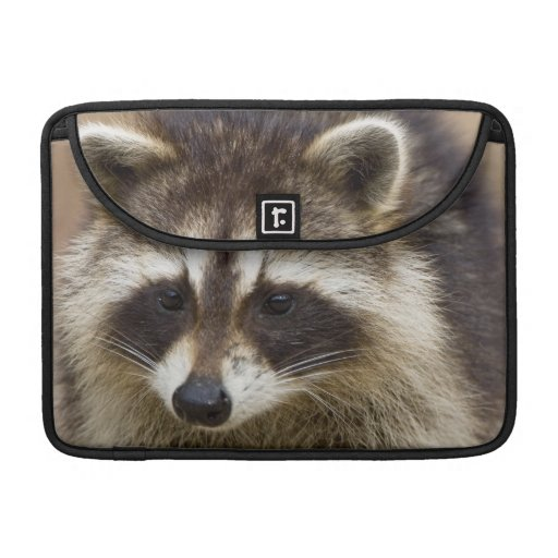 The raccoon, Procyon lotor, is a widespread, Sleeve For MacBook Pro