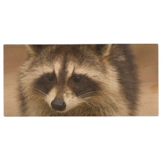 The raccoon, Procyon lotor, is a widespread, Wood USB 2.0 Flash Drive