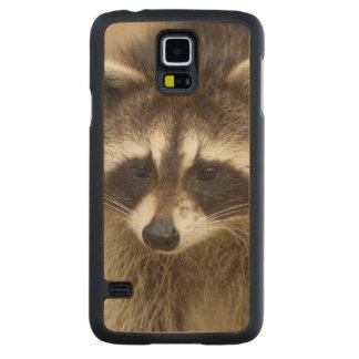 The raccoon, Procyon lotor, is a widespread, Maple Galaxy S5 Case