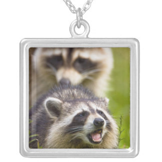 The raccoon, Procyon lotor, is a widespread, Custom Necklace