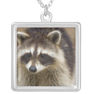 The raccoon, Procyon lotor, is a widespread, Square Pendant Necklace