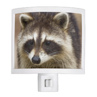 The raccoon, Procyon lotor, is a widespread, Nite Lites