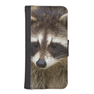 The raccoon, Procyon lotor, is a widespread, Phone Wallet
