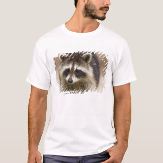 The raccoon, Procyon lotor, is a widespread, T-Shirt