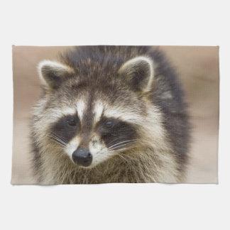 The raccoon, Procyon lotor, is a widespread, Tea Towel