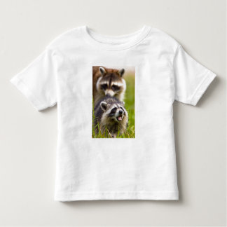 The raccoon, Procyon lotor, is a widespread, Toddler T-Shirt