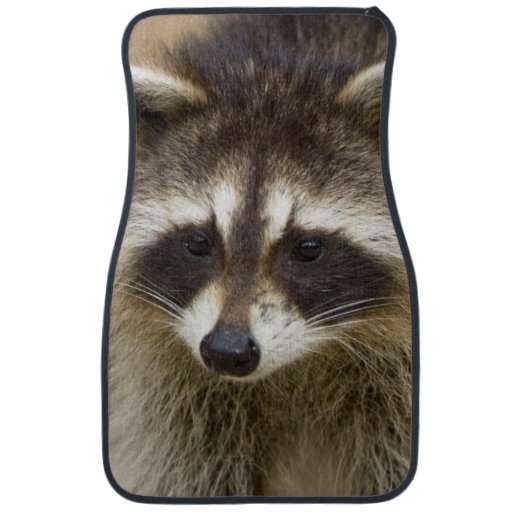 The raccoon, Procyon lotor, is a widespread, Car Mat