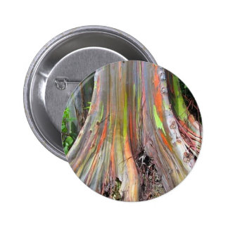The Rainbow Eucalyptus Tree Products 6 Cm Round Badge