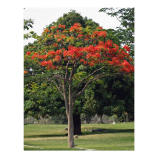 The red flowering tree in garden personalized flyer