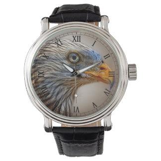 The Red Kite Bird Watch
