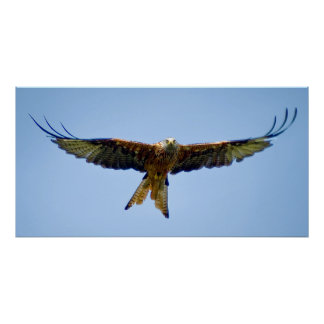 The red Kite Poster