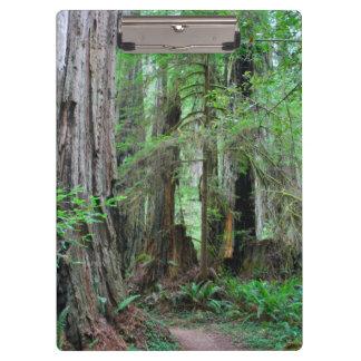 The Redwoods - Sequoia Clipboard
