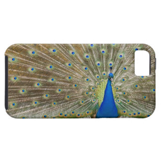 The resident male peacock fans his feathers in case for the iPhone 5