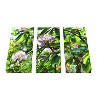 .The Rhododendrons Are In Bloom Canvas Print