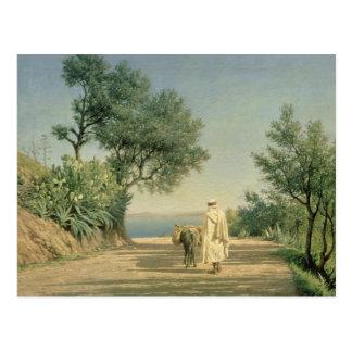 The Road to the Sea, Algeria, 1883 Postcard