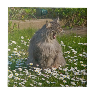 The Roaring Kitty Small Square Tile