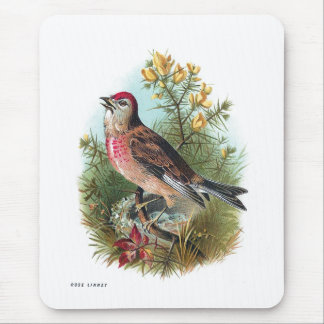 The Rose Linnet Mouse Pad