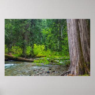 The Ross Creek Cedars Scenic Area Posters