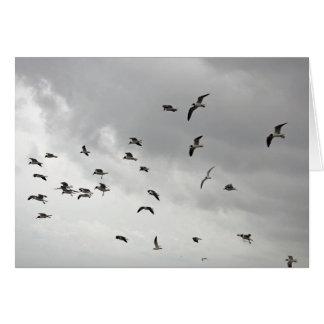 The Seagull Serenade - Greeting Card