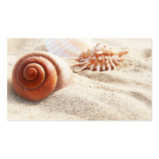 The seashells on the sand close up pack of standard business cards
