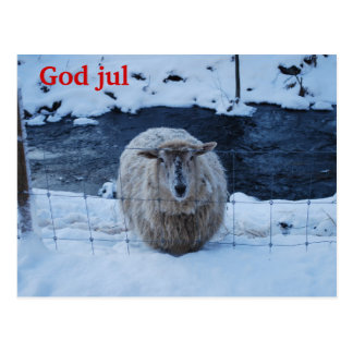 The sheep feather Christma short Post Cards