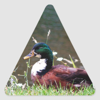 The Sitting Duck Triangle Sticker