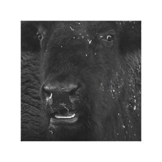 The Smile American Bison Canvas Print