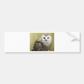 The Snowy Owl Bumper Sticker