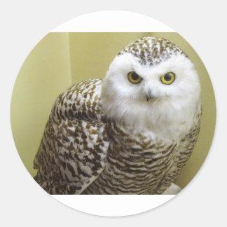 The Snowy Owl Classic Round Sticker