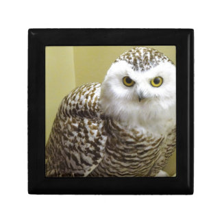 The Snowy Owl Gift Box
