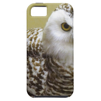 The Snowy Owl iPhone 5 Cover