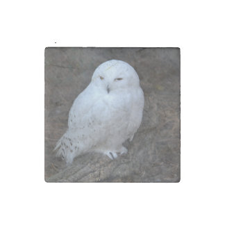 The Snowy Owl Stone Magnet