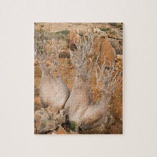 The Socotra Desert Rose or Bottle Tree Jigsaw Puzzle
