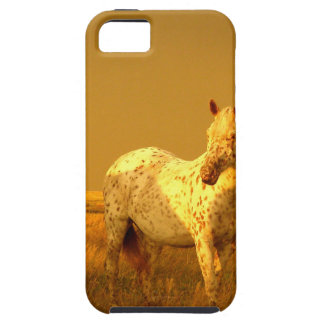 The Spotted Horse In The Golden Glow of A Prairie Case For The iPhone 5