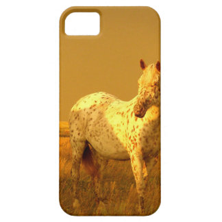 The Spotted Horse In The Golden Glow of A Prairie iPhone 5 Cases