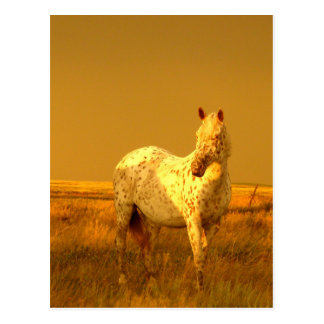 The Spotted Horse In The Golden Glow of A Prairie Postcard